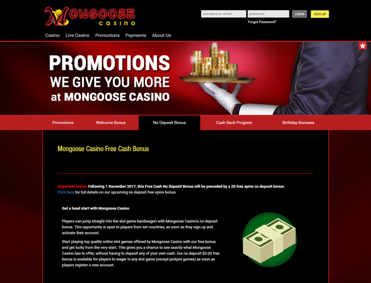 Mongoose Casino4